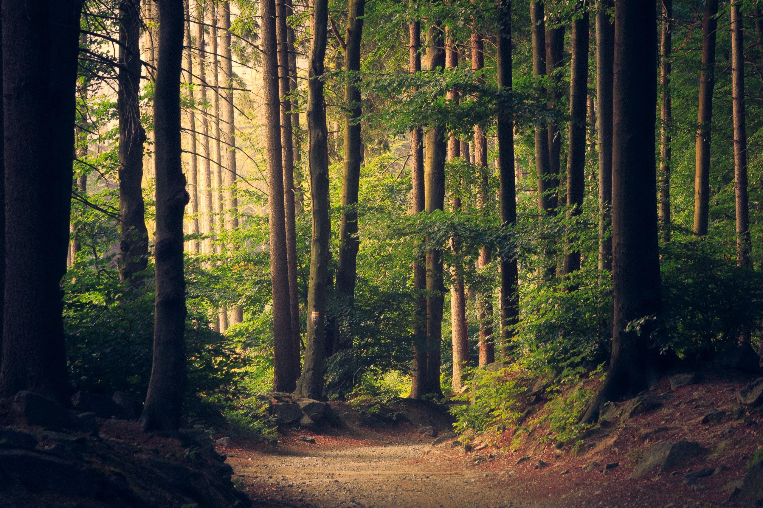Banner_Tree_Kalimba